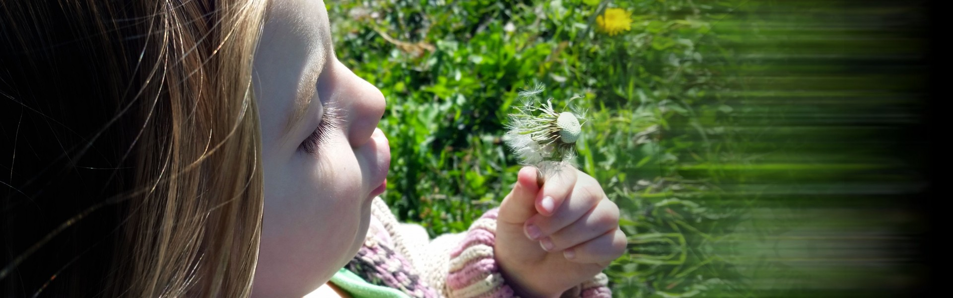 House Cleaning Services in Boulder CO   Dandelion Cleaning